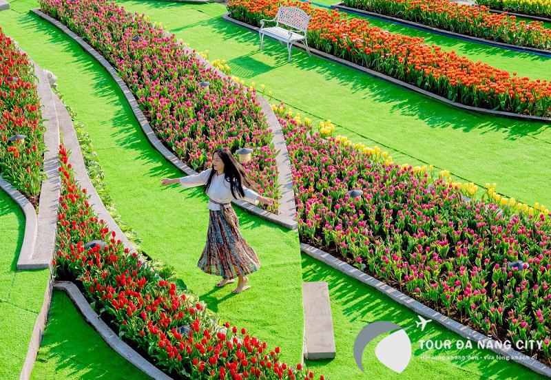 Nngắm hoa Tulip tại vườn hoa Bà Nà