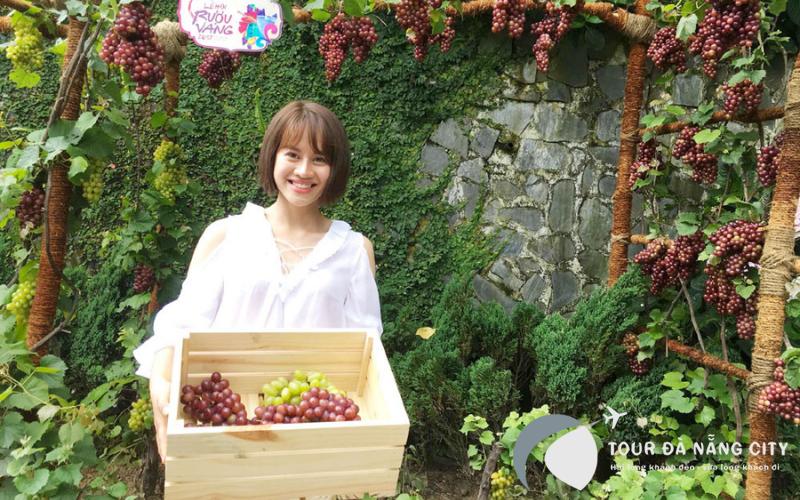 Vườn nho (Le jardin de vignes)