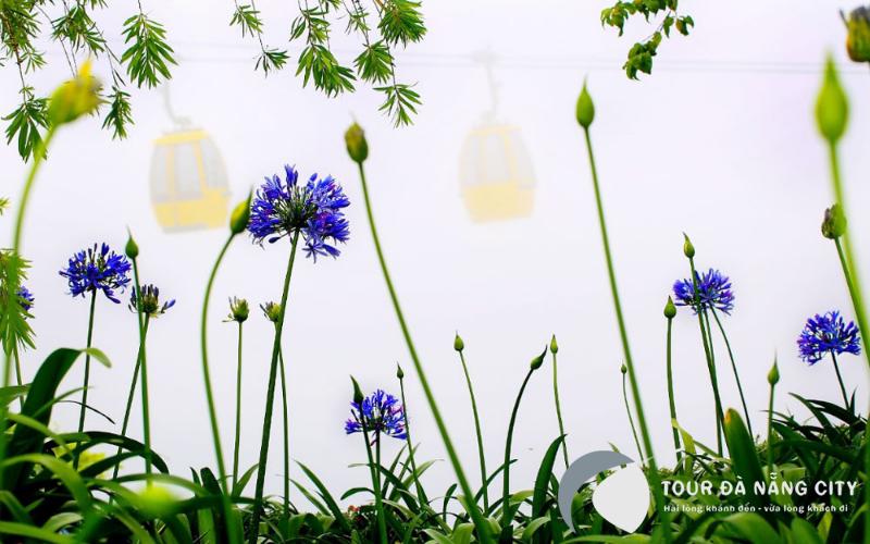 Màu sắc mát dịu của Thanh Anh tại vườn hoa Le Jardin D'Amour